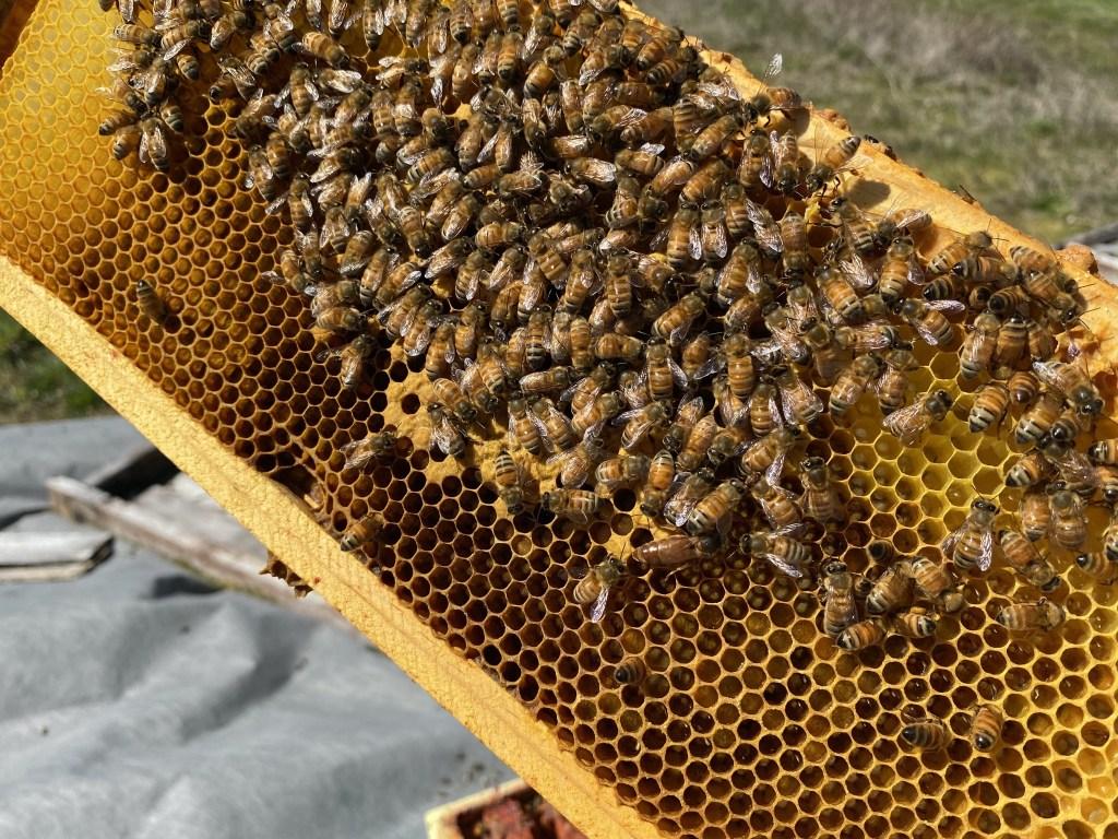 Orange hive queen