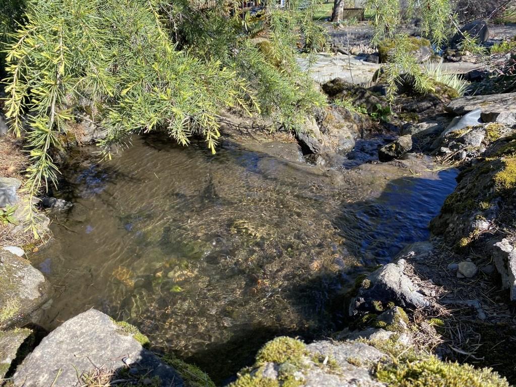 Upper falls pond