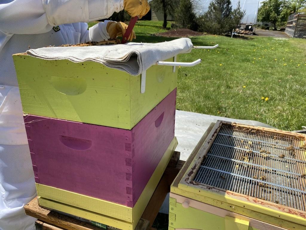 Yellow hive