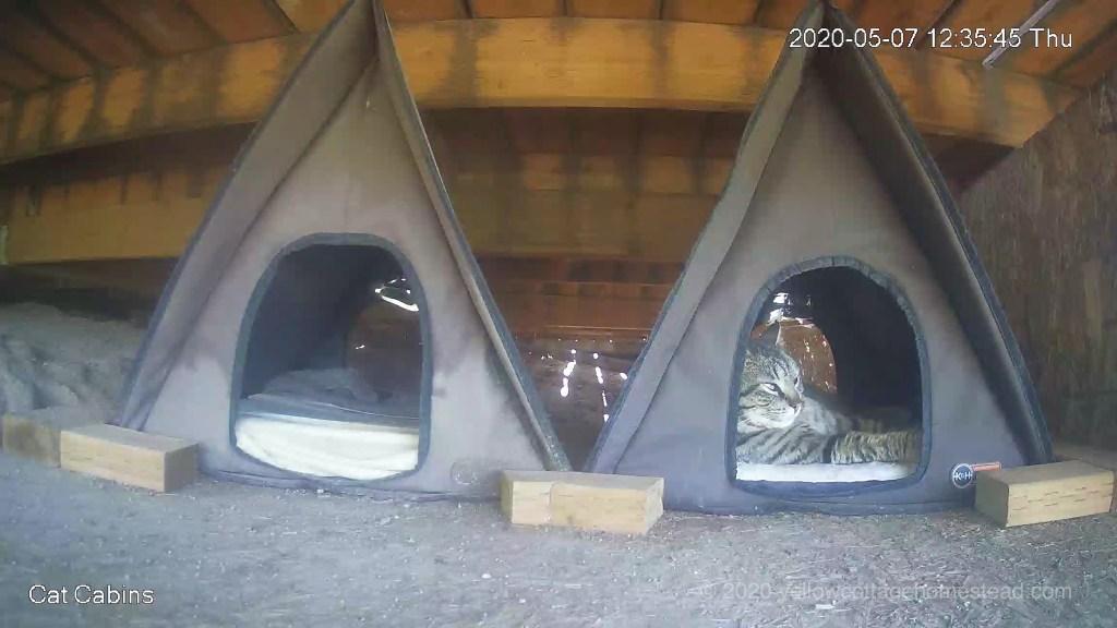 Comfy cabin cat