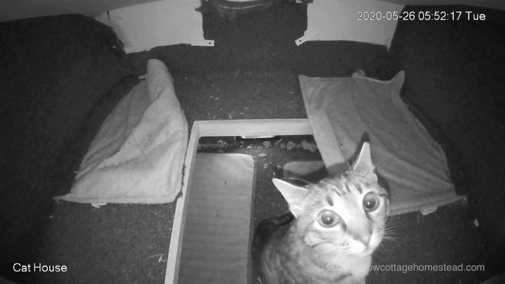 Cat looking at cam