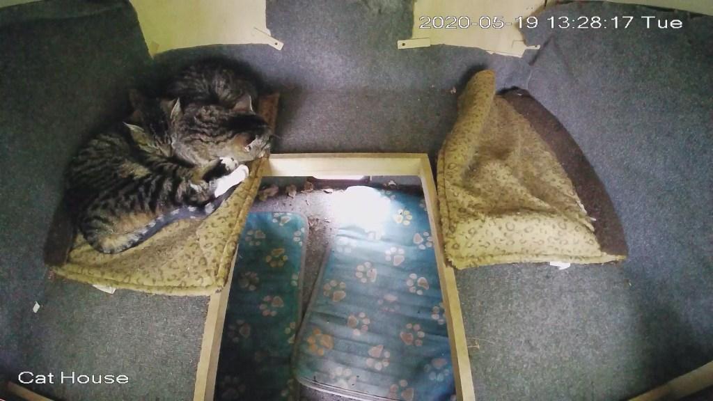 Cat house snuggles