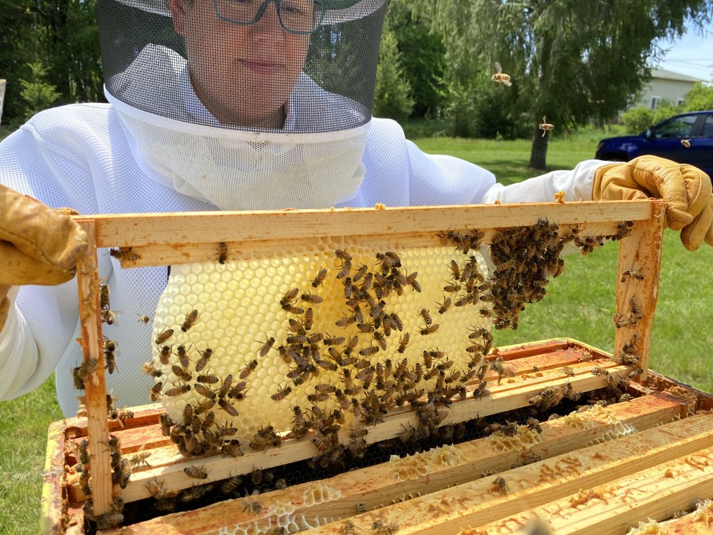 Nice new comb in yellow hive