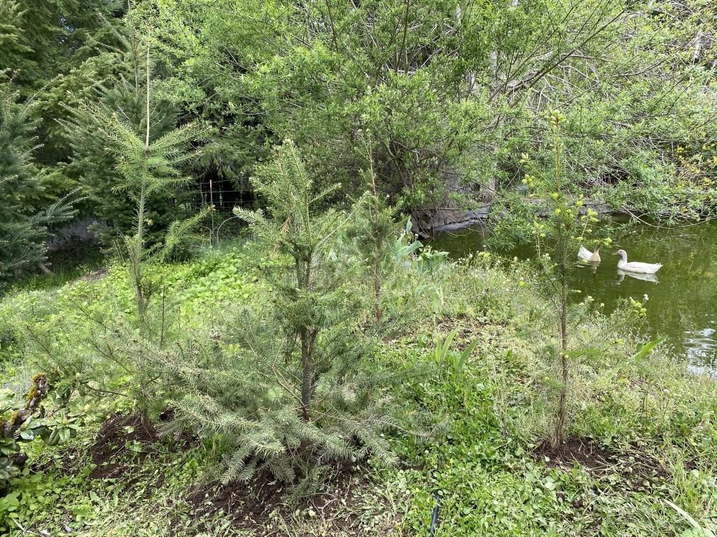 Seedlings left of pond