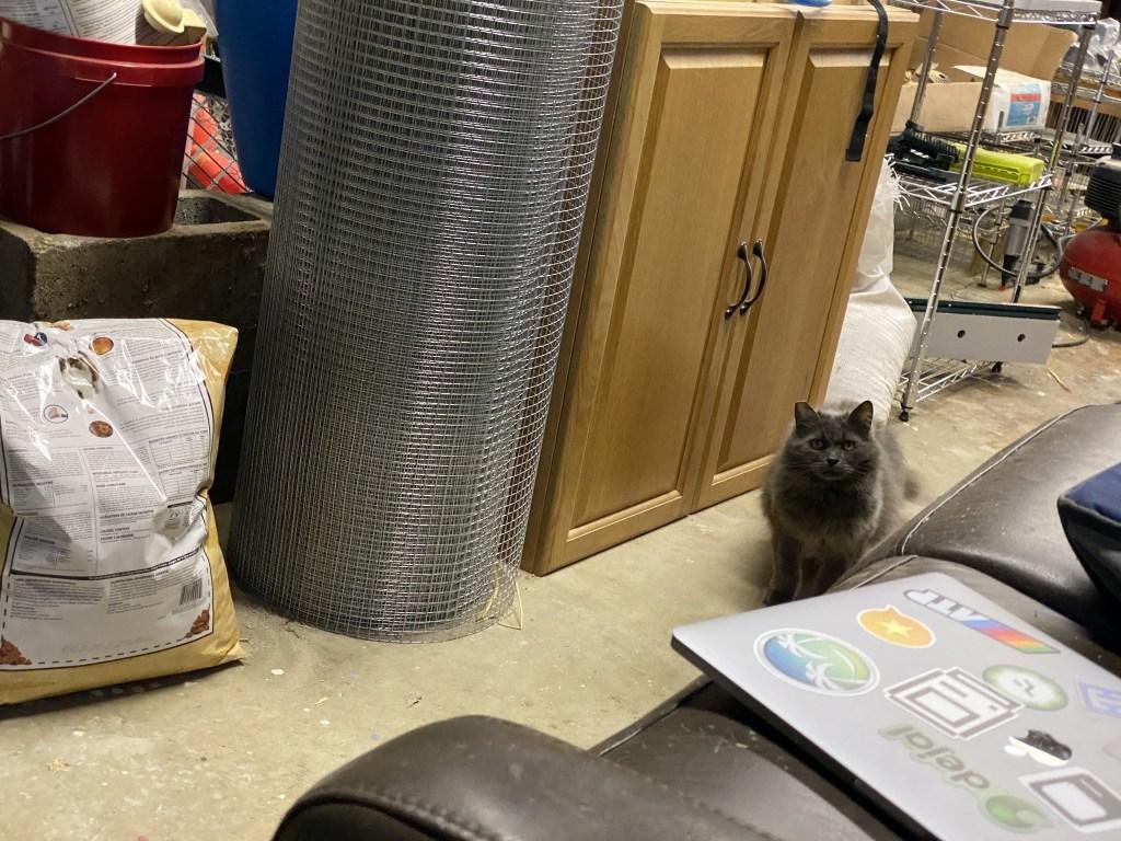 Cat in shop