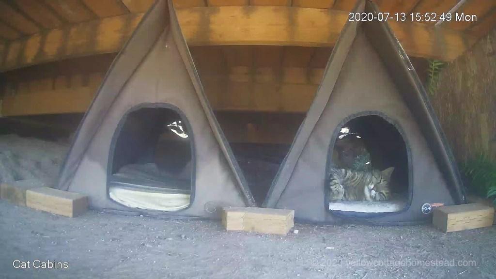 Cabin cat