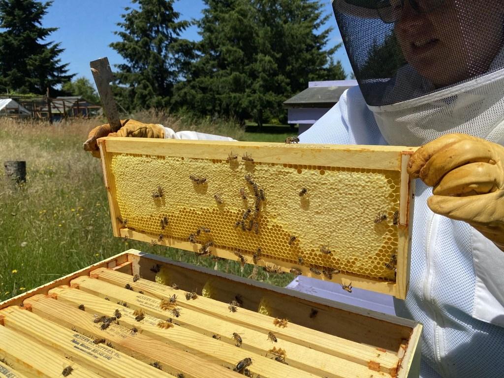 Turquoise honey frame