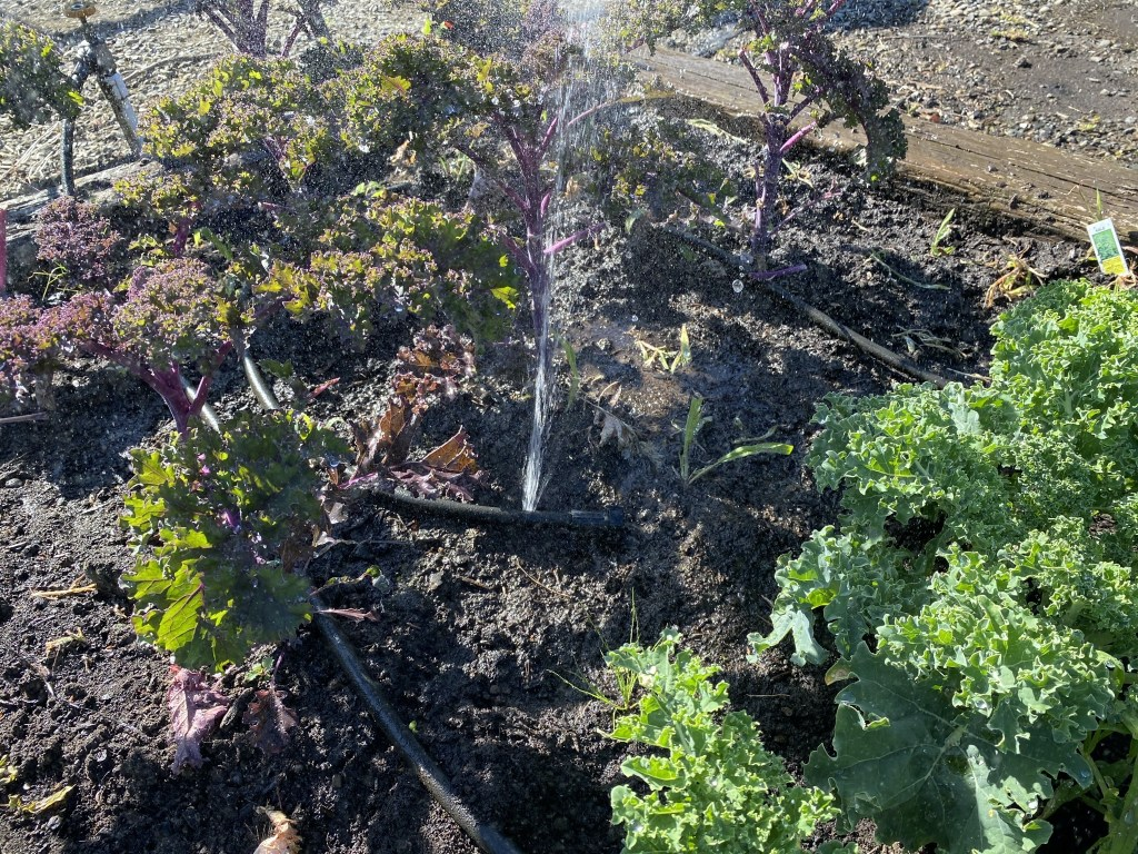 Burst soaker hose