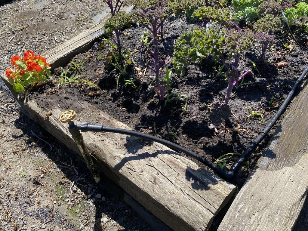 New irrigation
