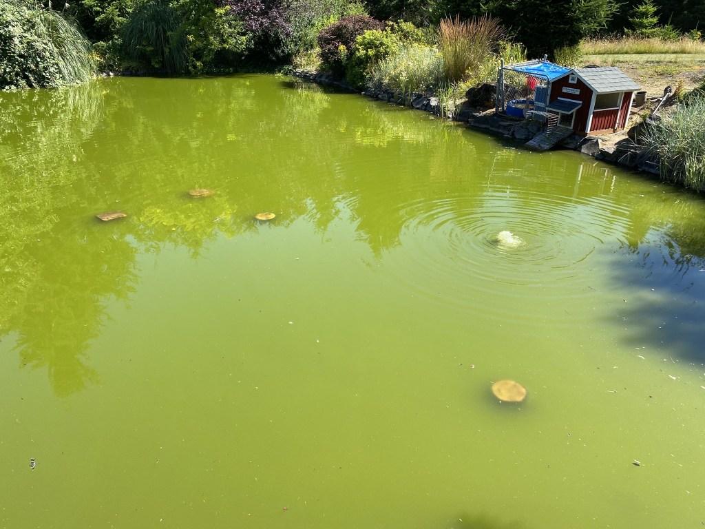 Pots in pond as islands