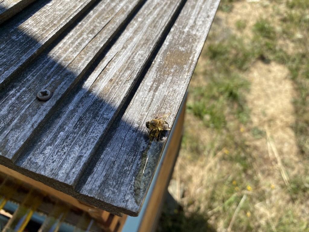 Sticky bee