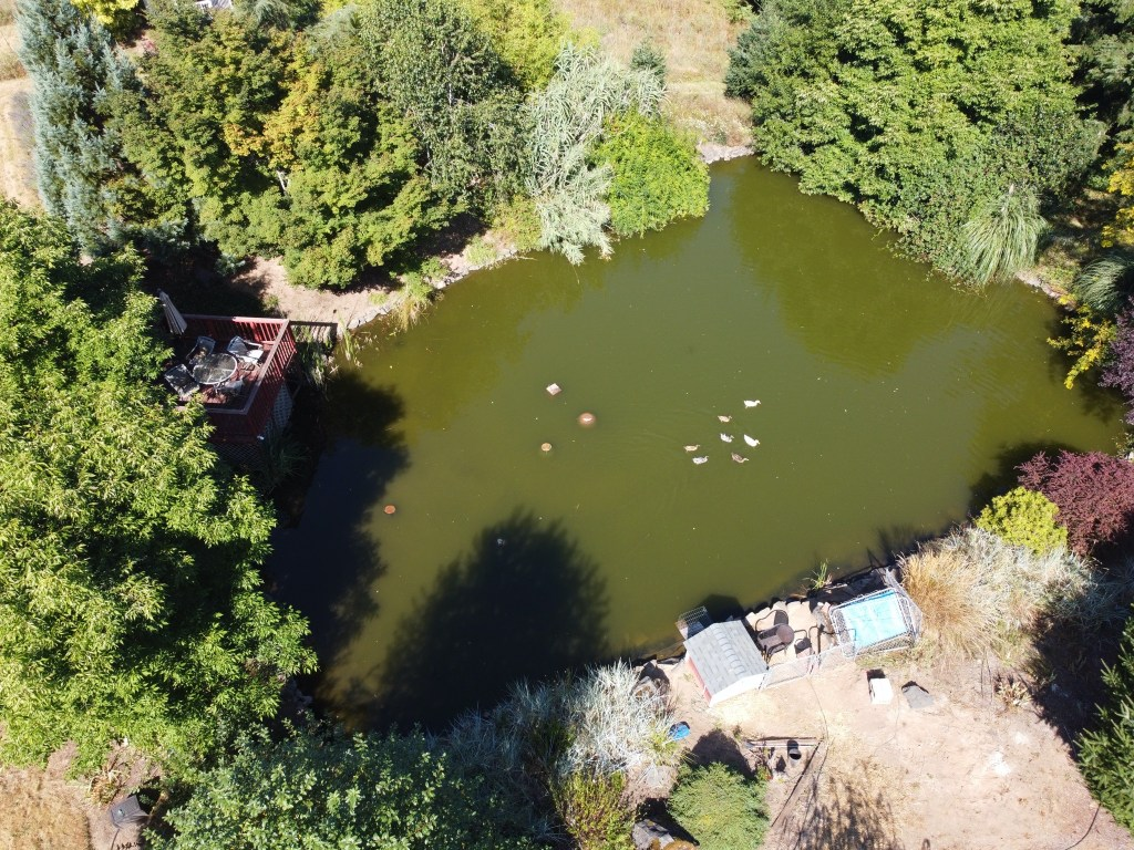 Aerial view of pond and ducks