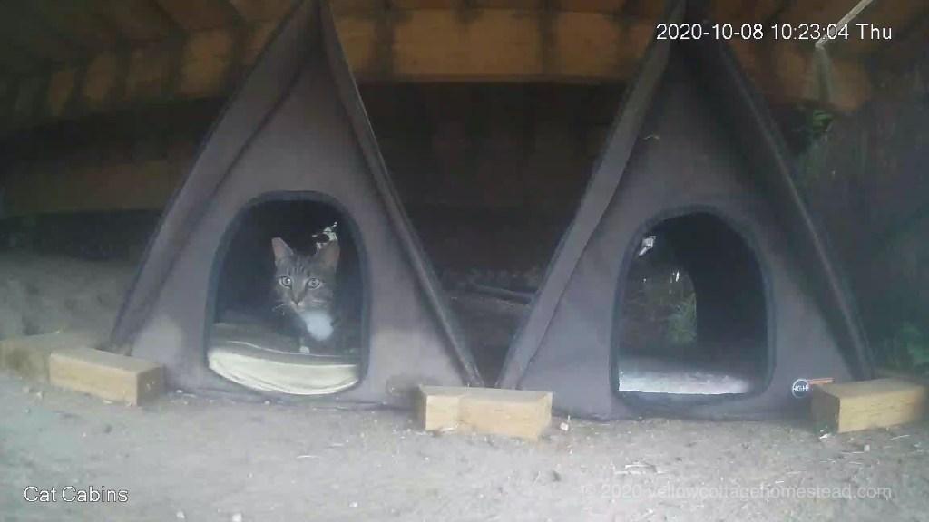 Porcini in a cabin