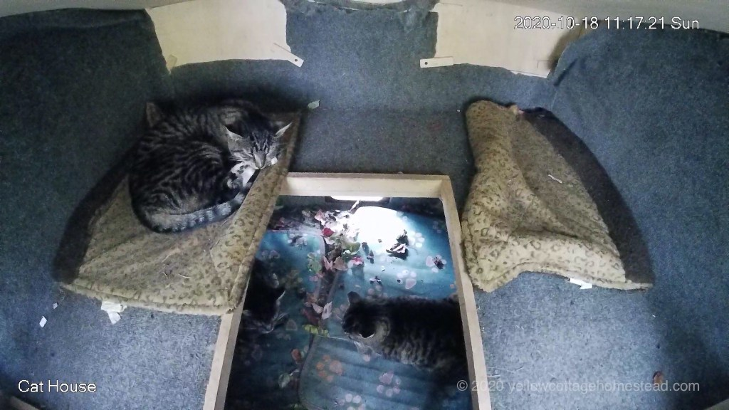 Three cats inside the cat house