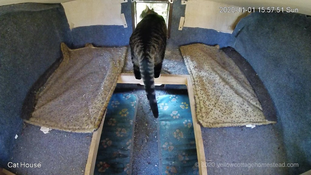 Inside the cat house
