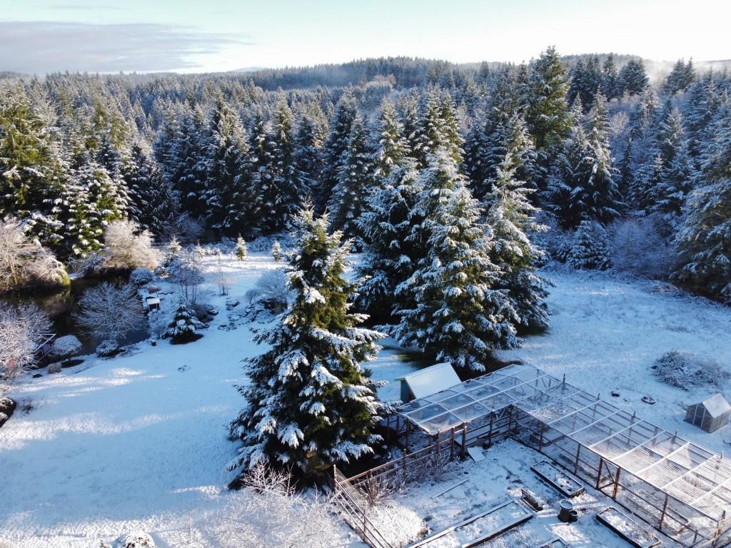Snowy pond, trees, veggie garden