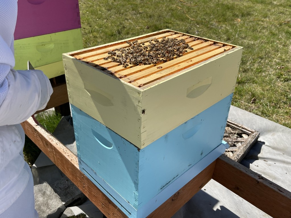 Turquoise hive: bees on top