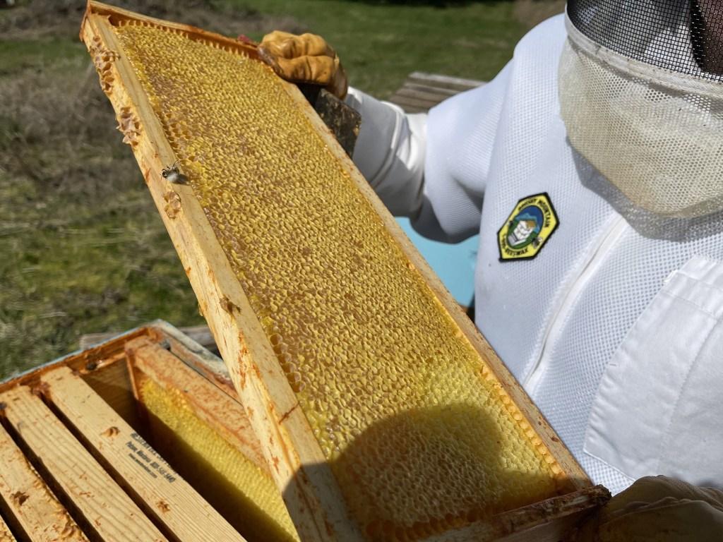 Hot pink hive: honey but no bees