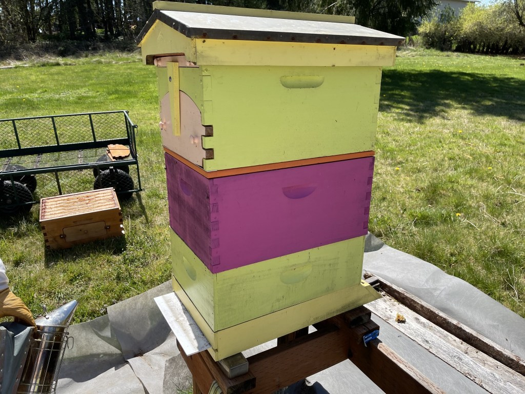 Yellow hive: added honey super