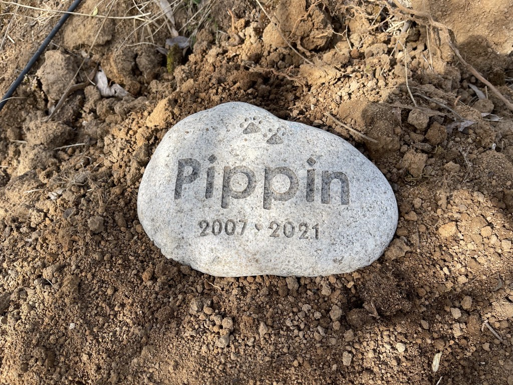 Pippin 2007-2021