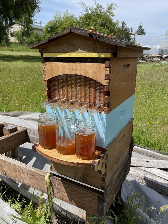 Flow honey harvest