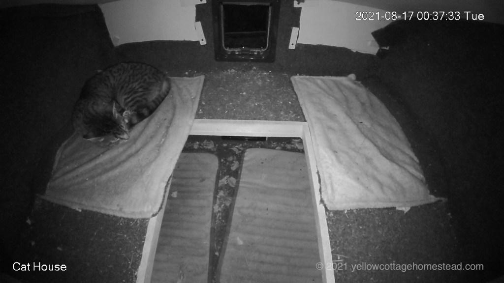 Porcini sleeping inside the cat house