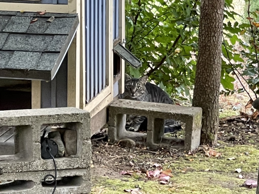 Cat watching me from behind the cat house