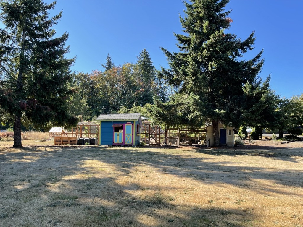 New and old chicken coops
