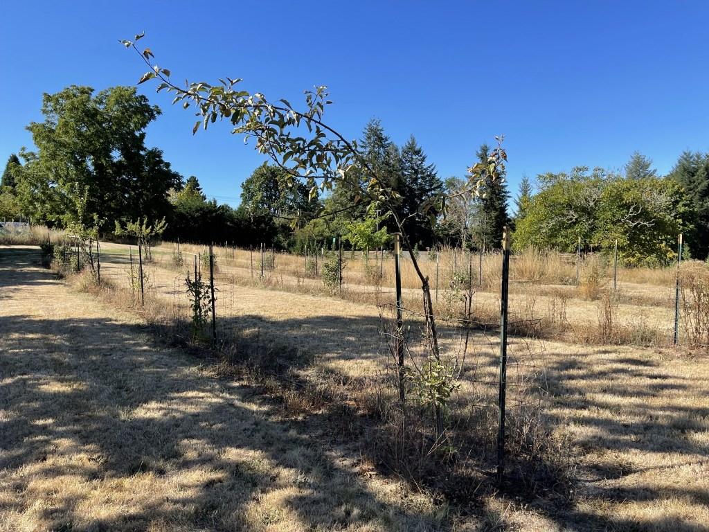 Apple trees in field