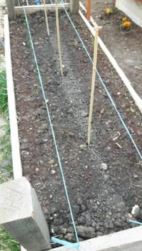 Ceapa (stânga) începe să rasară, la fel și gălbenelele (pe dreapta). Usturoiul și colțunașii sunt semănate, dar nu au răsărit încă. Patul așteaptă tomatele țărănești și busuiocul.