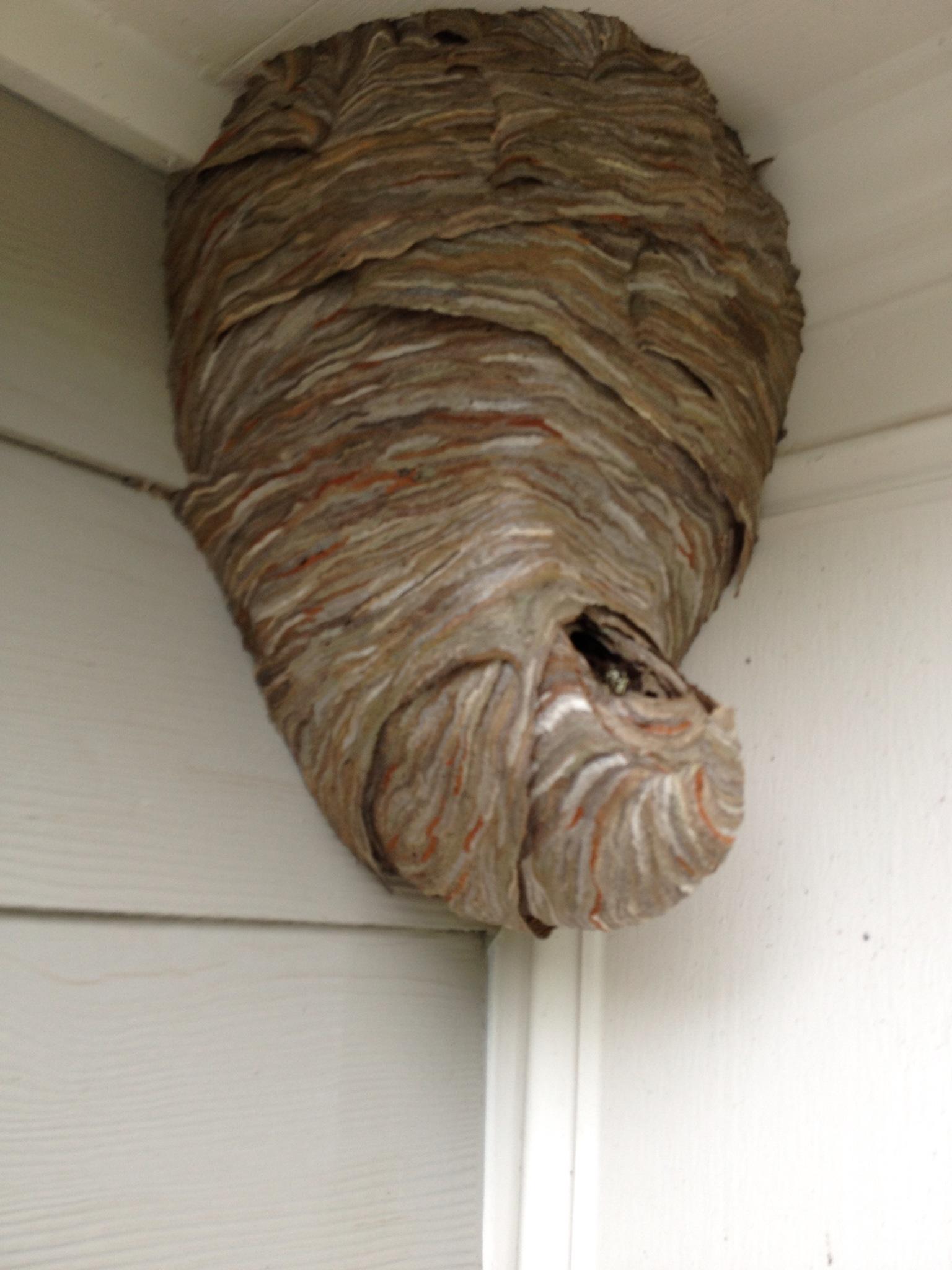 North Metro Atlanta Hornet | Bee | Yellowjacket Hive Removal