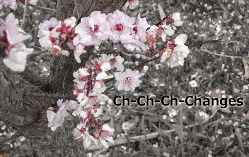 Ch-Ch-Ch-Changes, yellowreadis.com Images: Cherry Blossoms