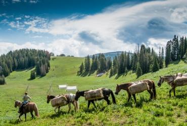 Summer in Montana.