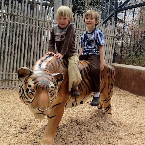 Boys on tiger