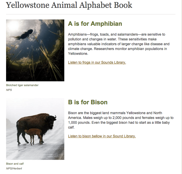 Yellowstone animal alphabet