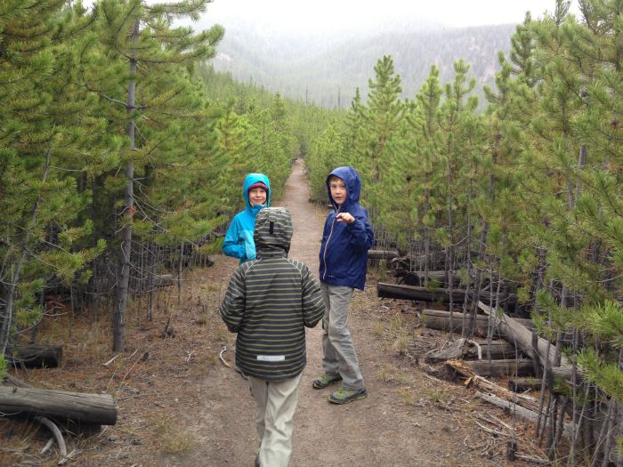 Little lodgepoles line the trail on the way to Harlequin Lake.