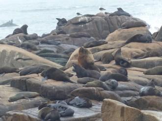 A seal colony on Cabo Polonio