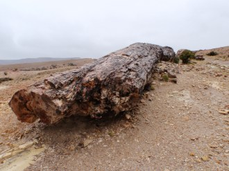 "We were just able to see and appreciate the ""petrified forest"", an area of fossilised trees, through the downpour"
