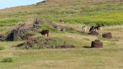 Our guide's partner's family Ahi has not been restored and he was troubled to see cattle roaming freely on, what is, a religious monument - we helped him chase them off