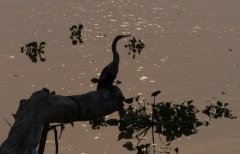 The Anhingas were all about posing...