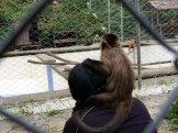 A monkey watching the monkeys!