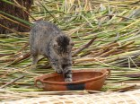 Although this one seemed to be more interested in a bowl of little fish!