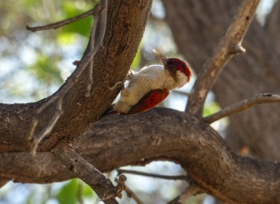 A woodpecker spotted when we stopped for a lunch break and a cooling dip in the river