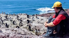 Becca taking time to appreciate the Rockhopper Penguins in Argentina