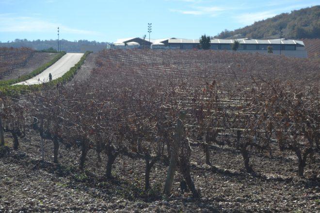 Bodega rodeada de viñas