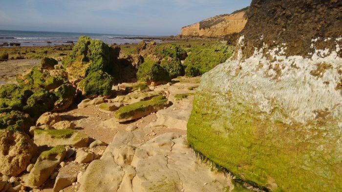 Rocas tapizadas de verde