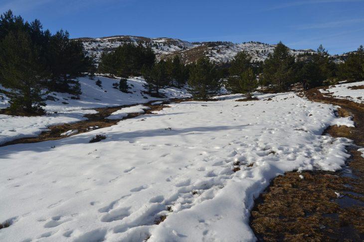 Paisaje nevado