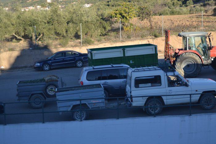 Vehículos cargados de aceitunas recolectadas