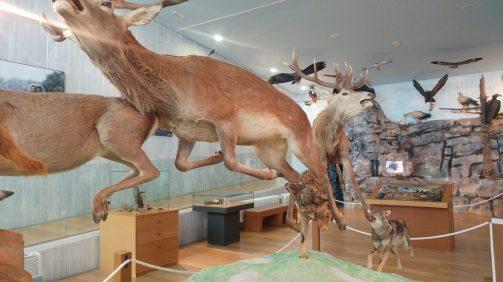 Museo de la Naturaleza del Valle del Alberche