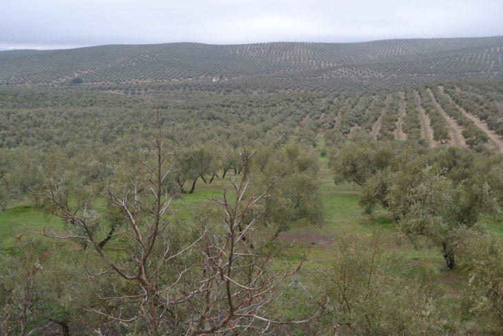 4 caras diferentes del AOVE de Jaén